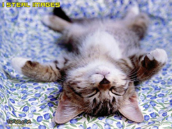 Image result for tidur menelentang